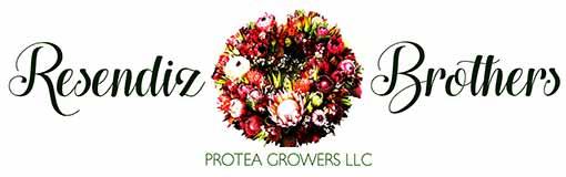 Logo - Resendiz | Georgia State Floral Distributors, LLC